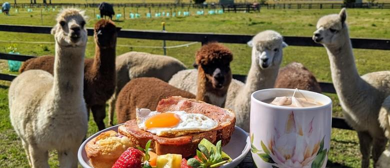 Breakfast with Alpacas